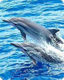Delphin beobachten