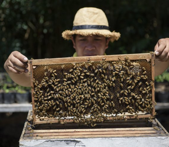 Die Bohol Bienenfarm