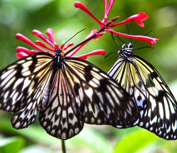 Schmetterlingsschutzgebiet