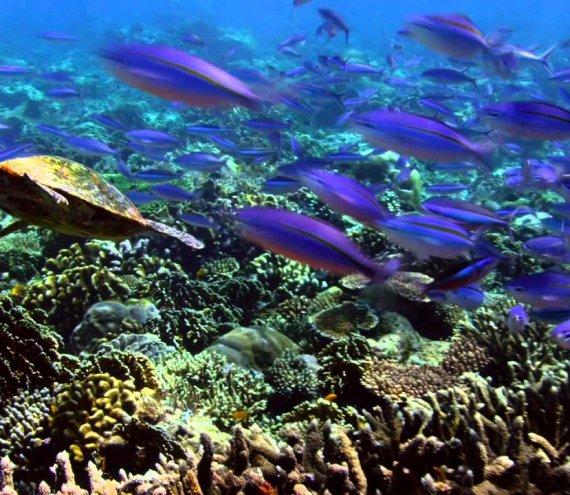 Coral Eden