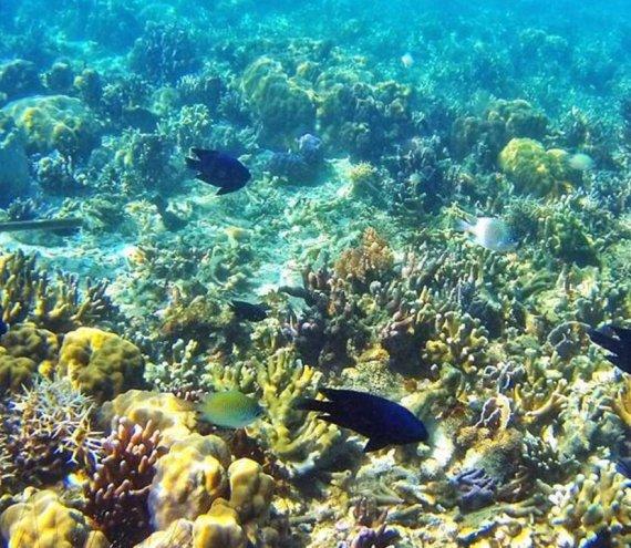 Der Lusong Korallengarten