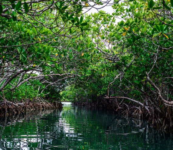 Puerto Galera Mangrove Conservation Area