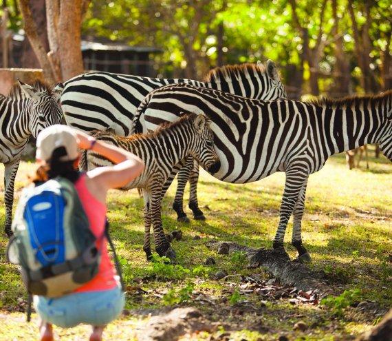 Der Calauit Island Safari Park