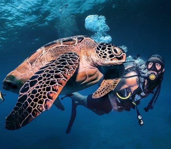 Agpanabat Sea Turtle Sanctuary