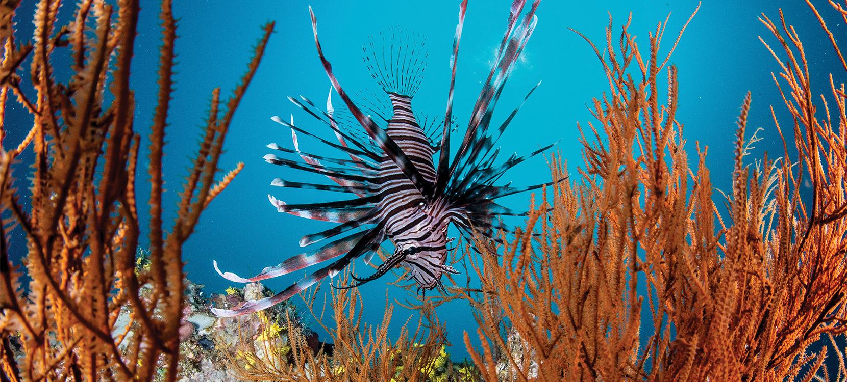 Unterwasserwelten