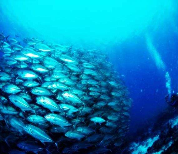 Tulapos Meeresschutzgebiet